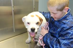 Winnie at the vet.