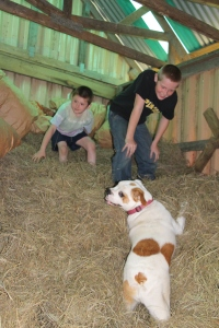 The boys and Winnie playing in the hay shed.
