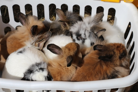 Our baby bunnies are all grown up!