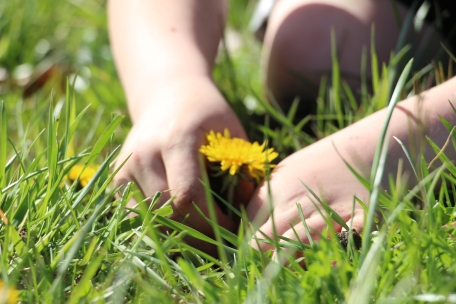 """If Dandelions were hard to grow they would be most welcome on any lawn."" -Andrew Mason"