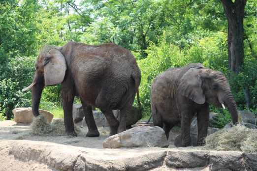 zoo 010