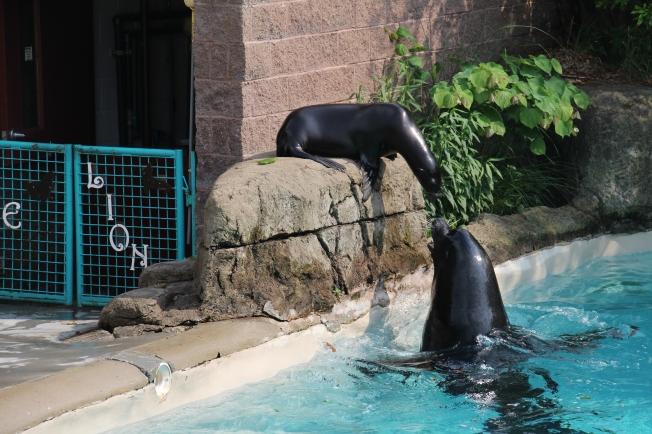 zoo 045