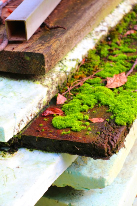Moss growing on a pile of wood.