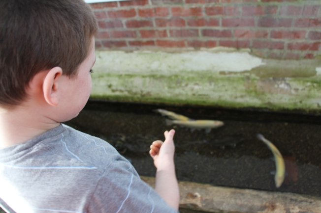 Tyler feeding the trout that live in the spring room of my parents' 200 year old home.