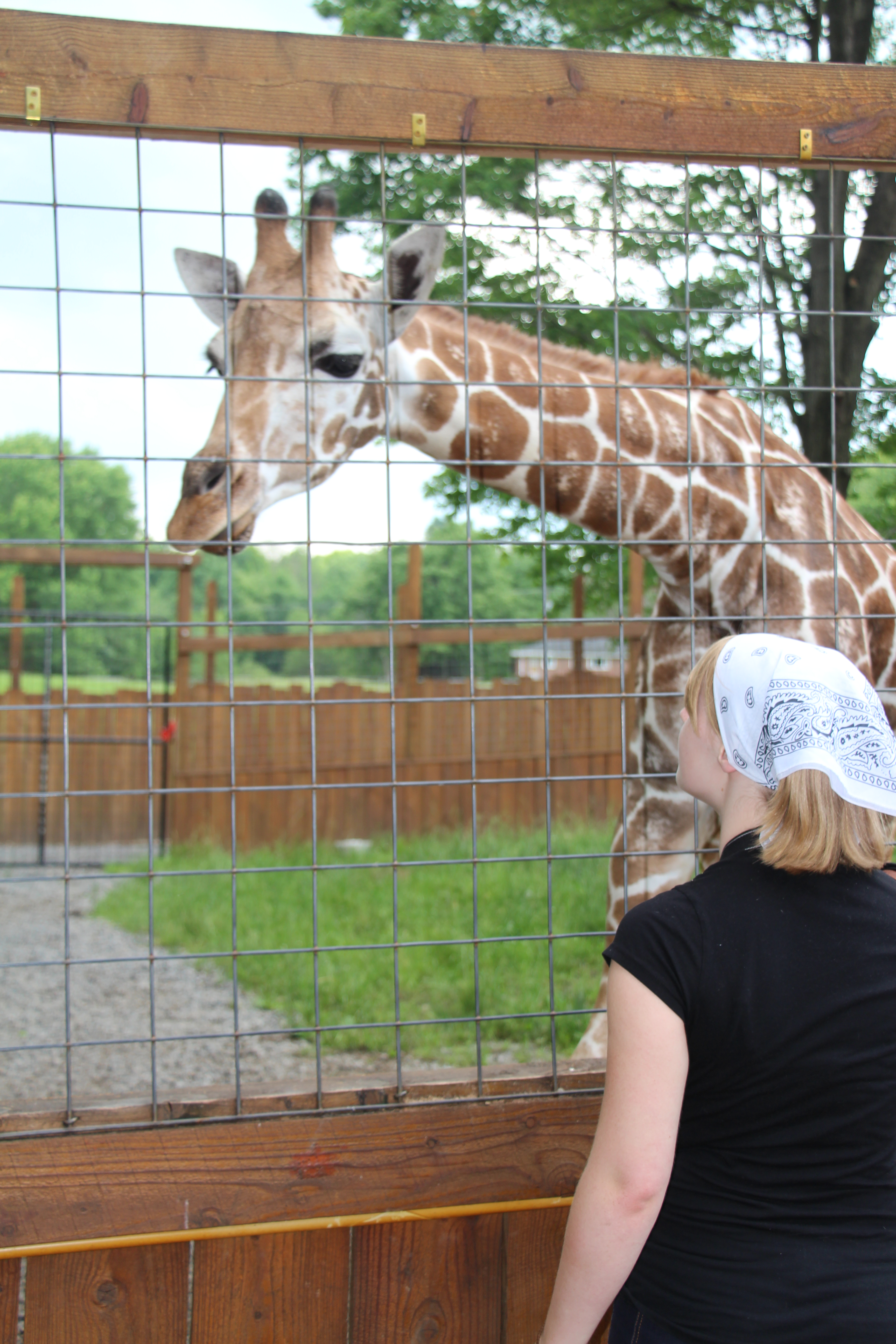 favorite animal giraffe Animals & realms  world giraffe day activities will take place 10am - 4pm, at  the giraffe encounter post and overlook cafe  vote for your favorite  montgomery zoo giraffe: each giraffe at the montgomery zoo, ashley,.