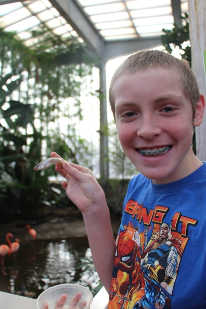 The Wetlands was our first stop. Here they had the chance to feed the pelicans little fish.