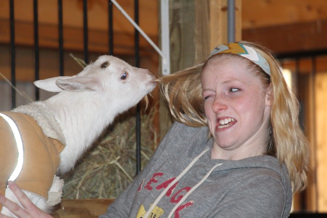 Molly being eaten by an attack goat!