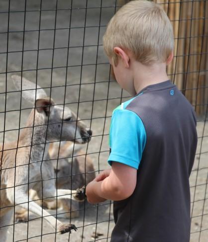 Sammy feeding the wallaby carrots.