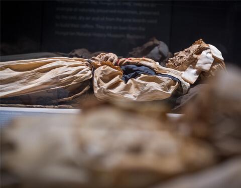 mummies-slide-03a-480x375